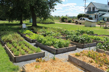 On her blog, Access to the Garden, Brenda Brown Parent shares that she grows heirloom lettuce, herbs and peppers in her raised garden beds. Learn more about accessible gardening with Access to the Garden!