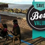 A Wheelchair User's Guide to Prescription Savings for You & Your Pet