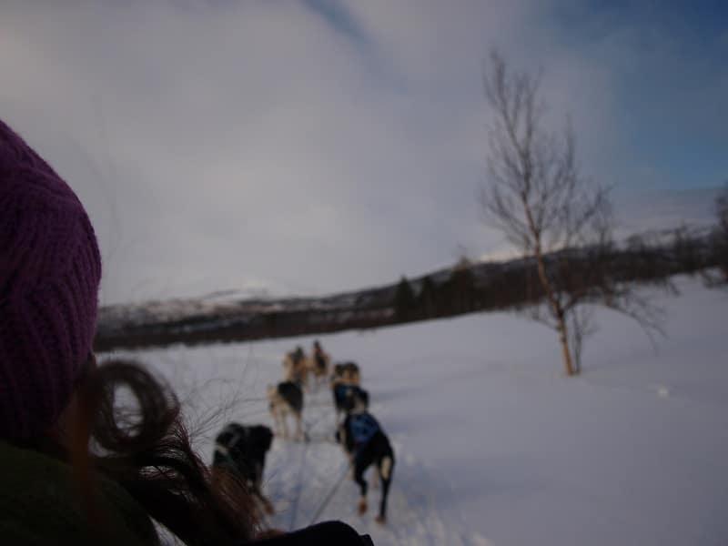 Dog sledding in Abisko, Sweeden