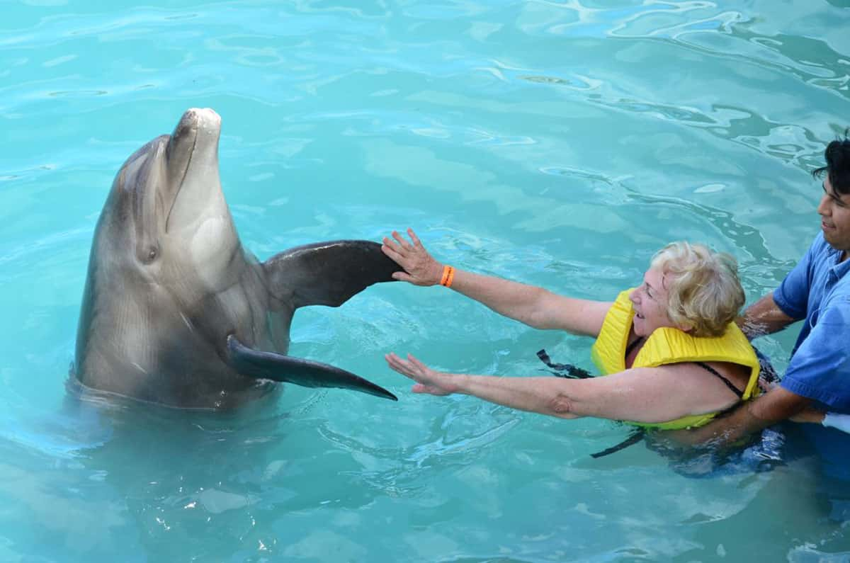 dolphin-disability