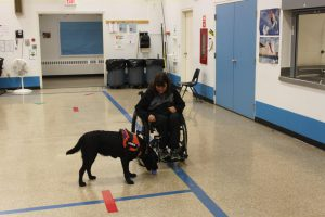 the-life-of-a-service-dog15