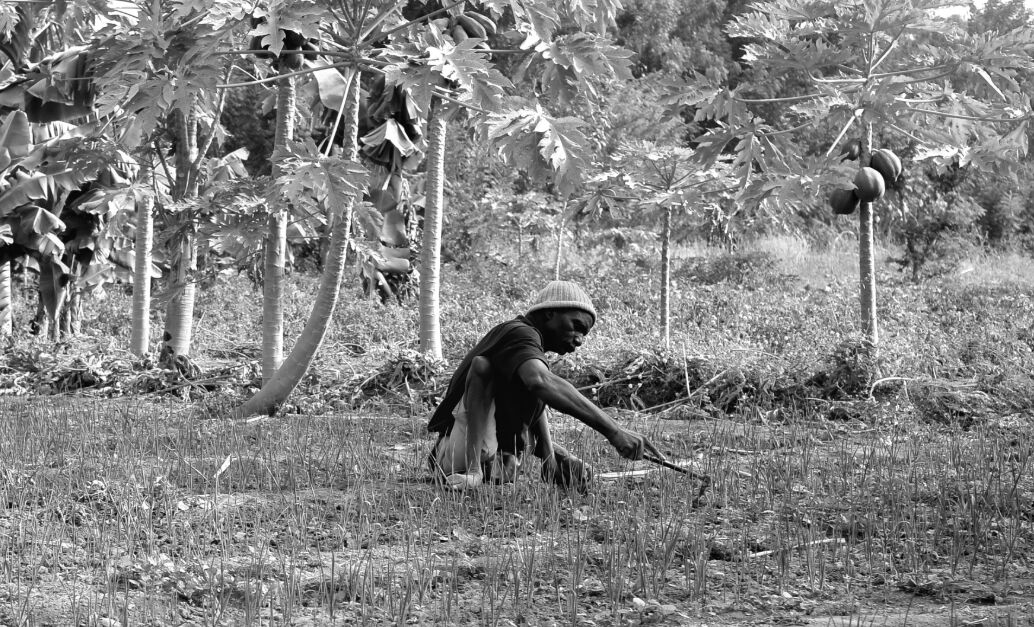 A man sitting on the ground in a tropical setting. He is using a tool to dig into the earth.
